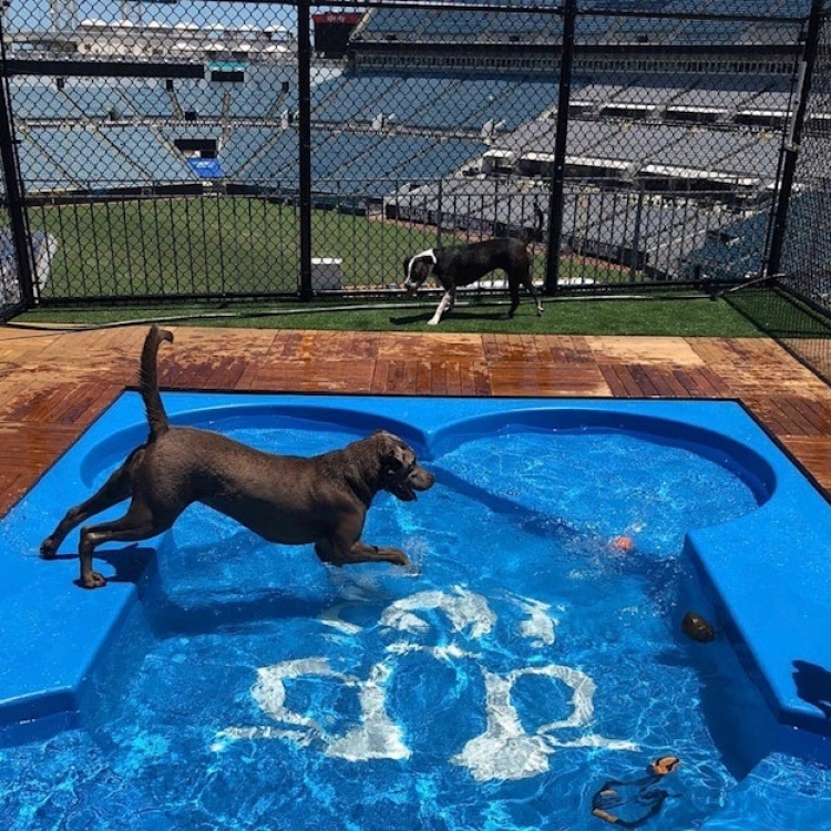 Jacksonville Jaguar Dog Pool